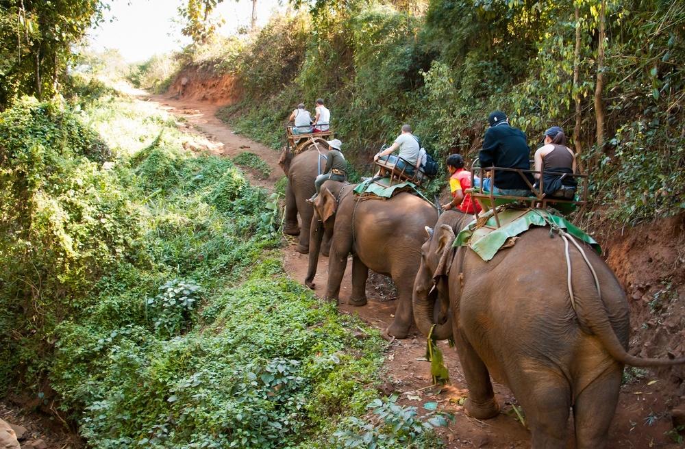 elefanter i nordthailand